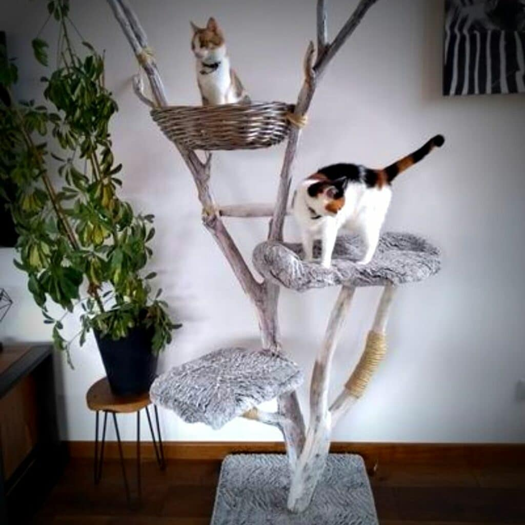 A chat qu'un son arbre - Arbre à chat -