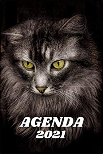 Agenda 2021 Chat Maine Coon