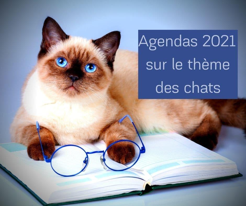 Agendas 2021 sur le thème des chats