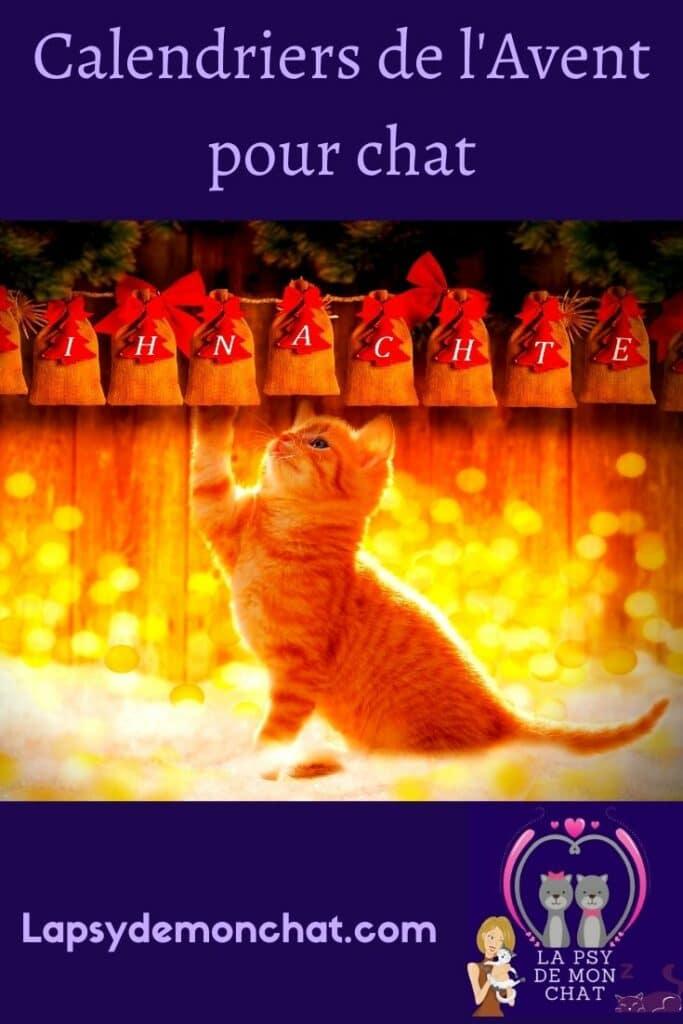 Calendriers de l'Avent pour chat - pinterest
