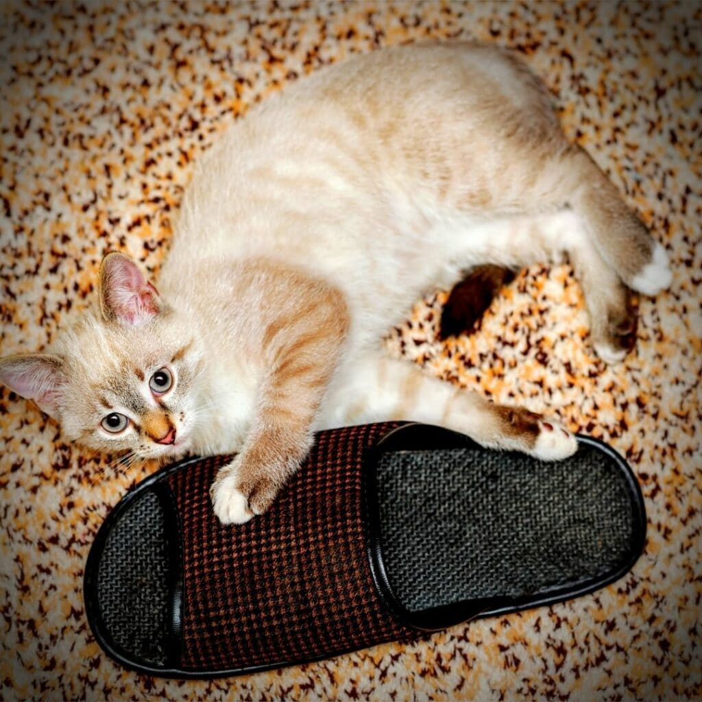 chaussons chat pour homme