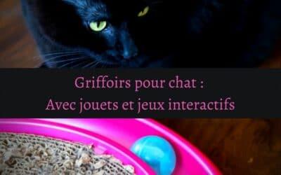 Griffoirs pour chat : Avec jouets et jeux interactifs