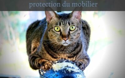 Griffoirs pour chat : protection du mobilier