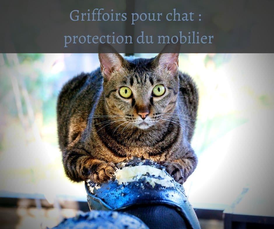 Griffoirs pour chat protection du mobilier