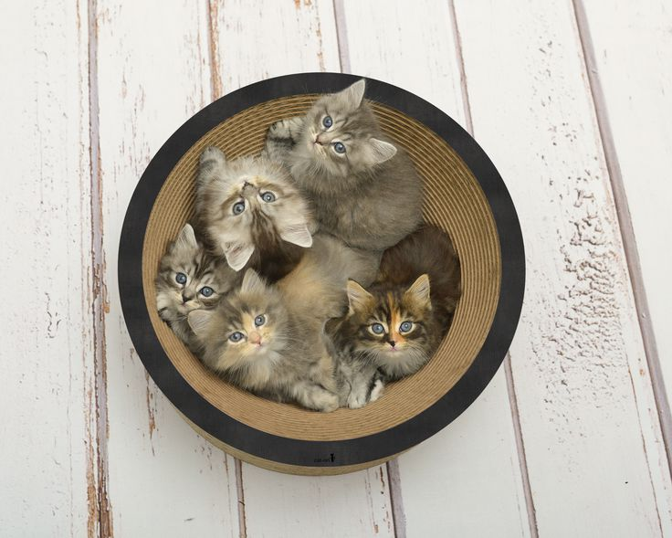La Coupe corbeille à chat de chez Cat on