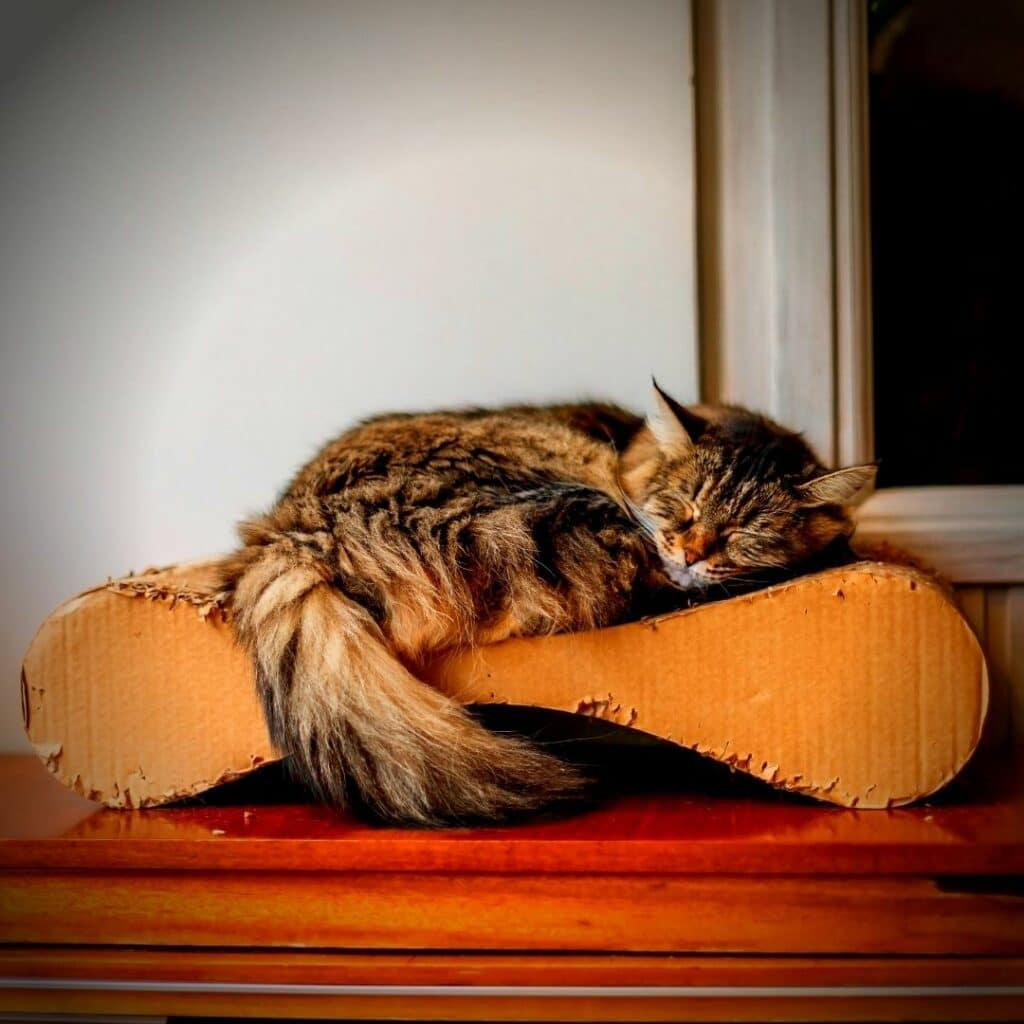 griffoir design pour chat Horizontal  style sofa et Canapé