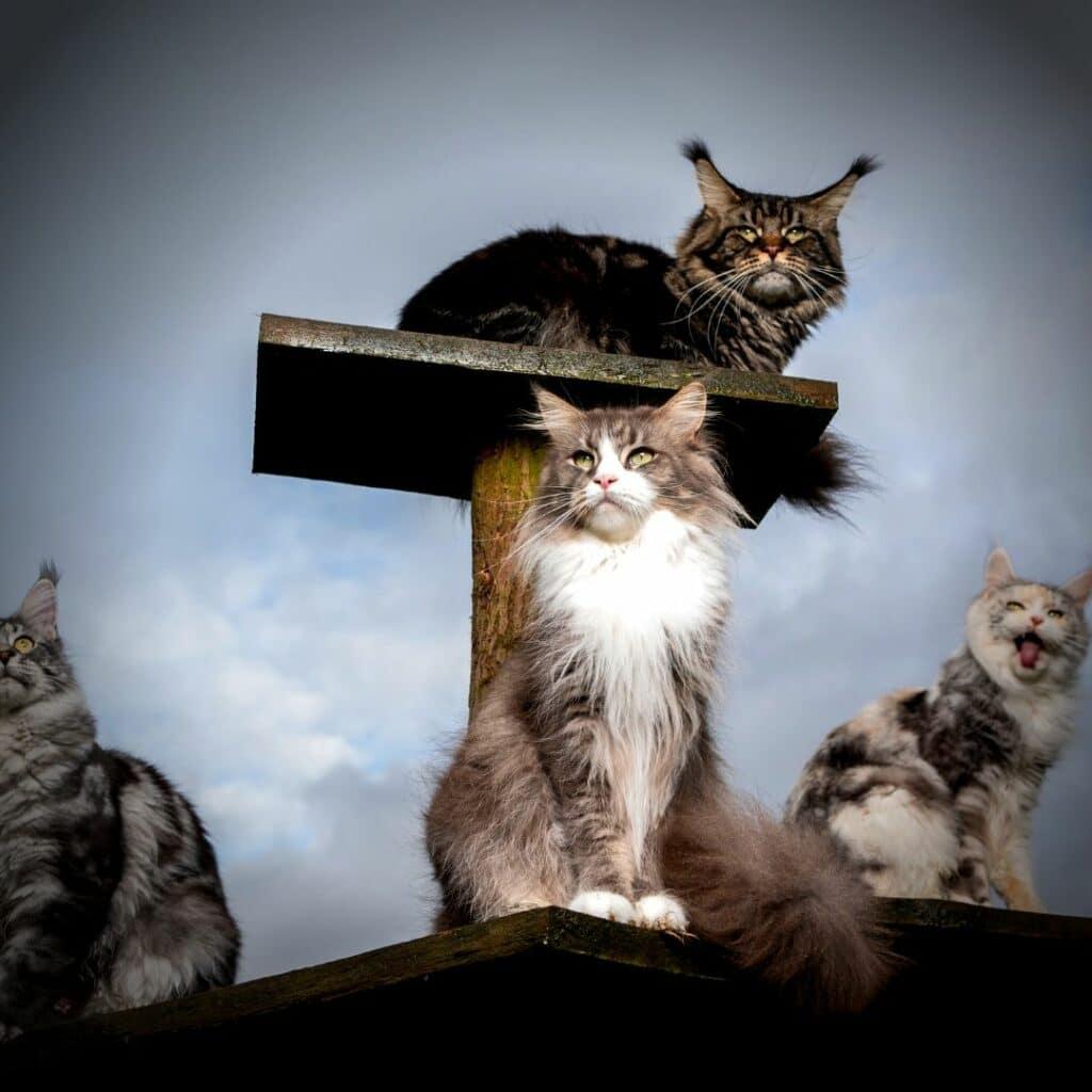 griffoir design pour chat horizontal  plateforme