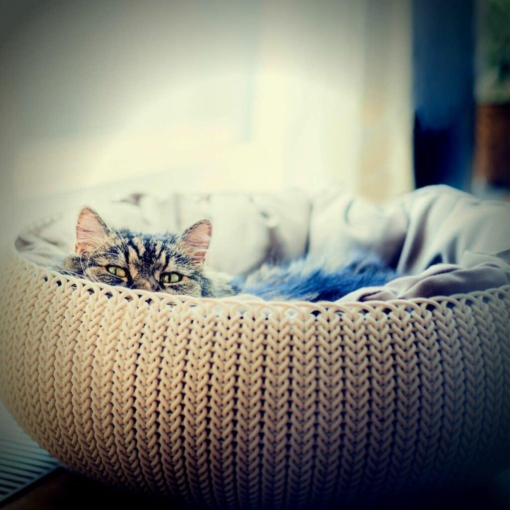 griffoir design pour chat horizontal  style panier