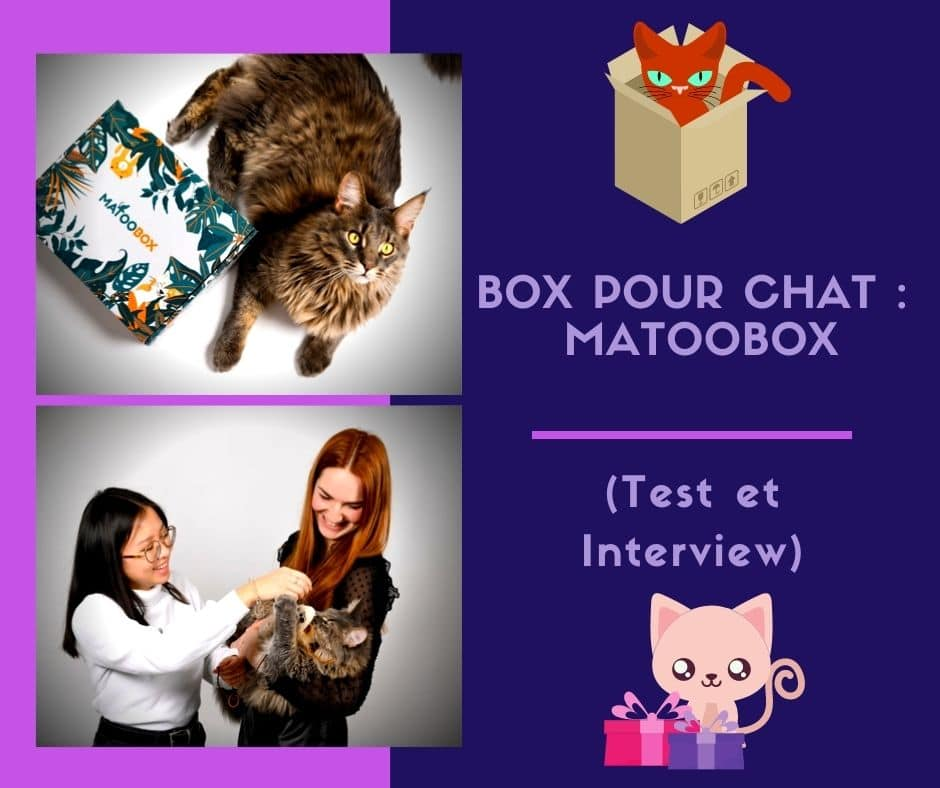 Box pour chat Matoobox ( Test et Interview )
