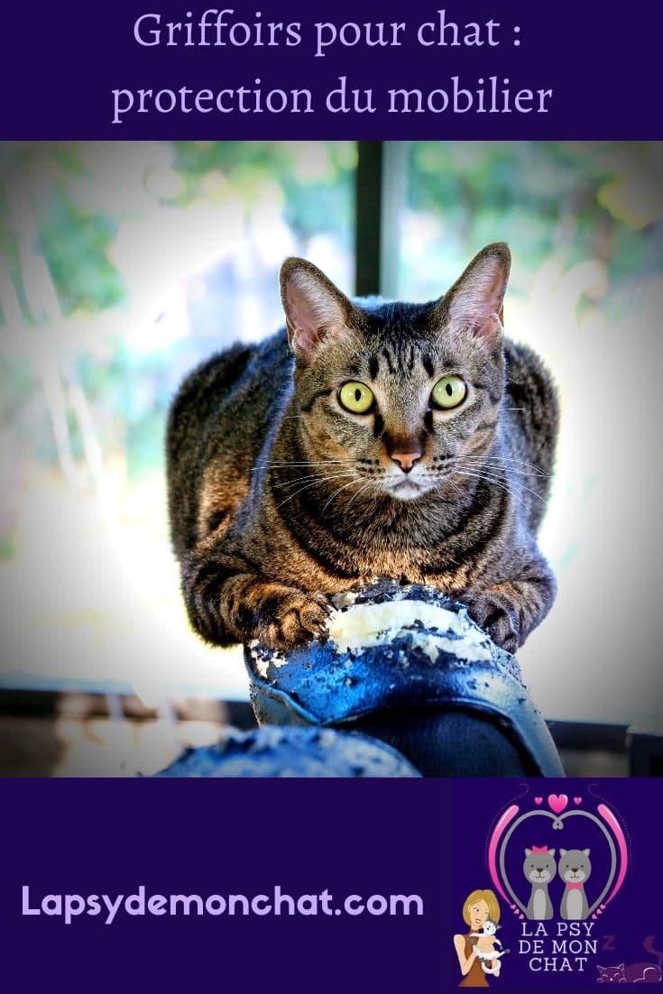 Griffoirs pour chat protection du mobilier - pinterest