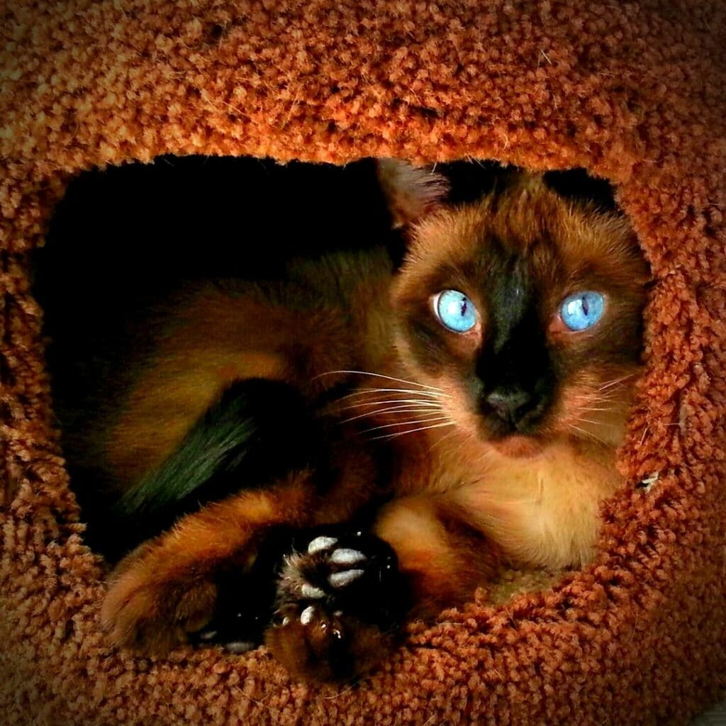 Un griffoir design pour mon chat Style Maison