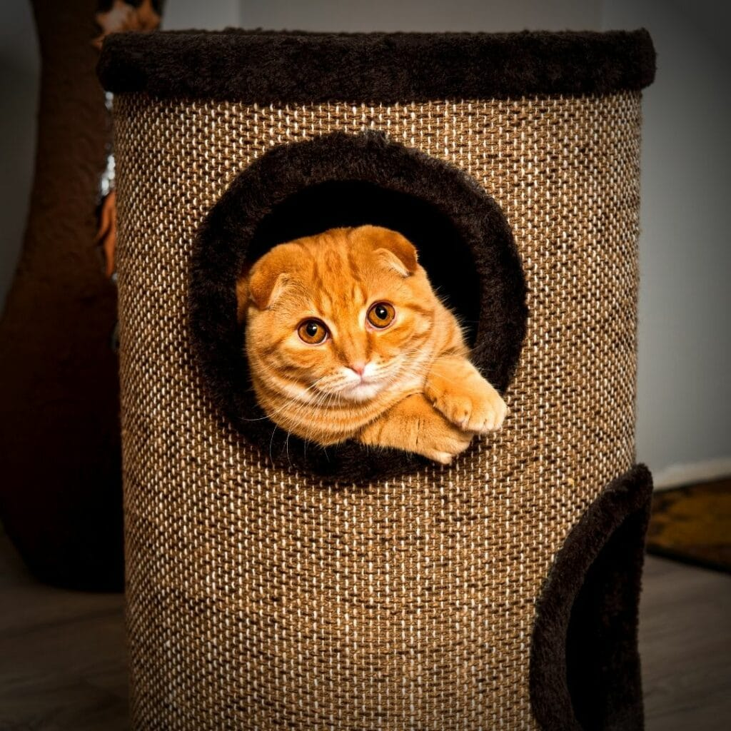 Un griffoir design pour mon chat Style Tour