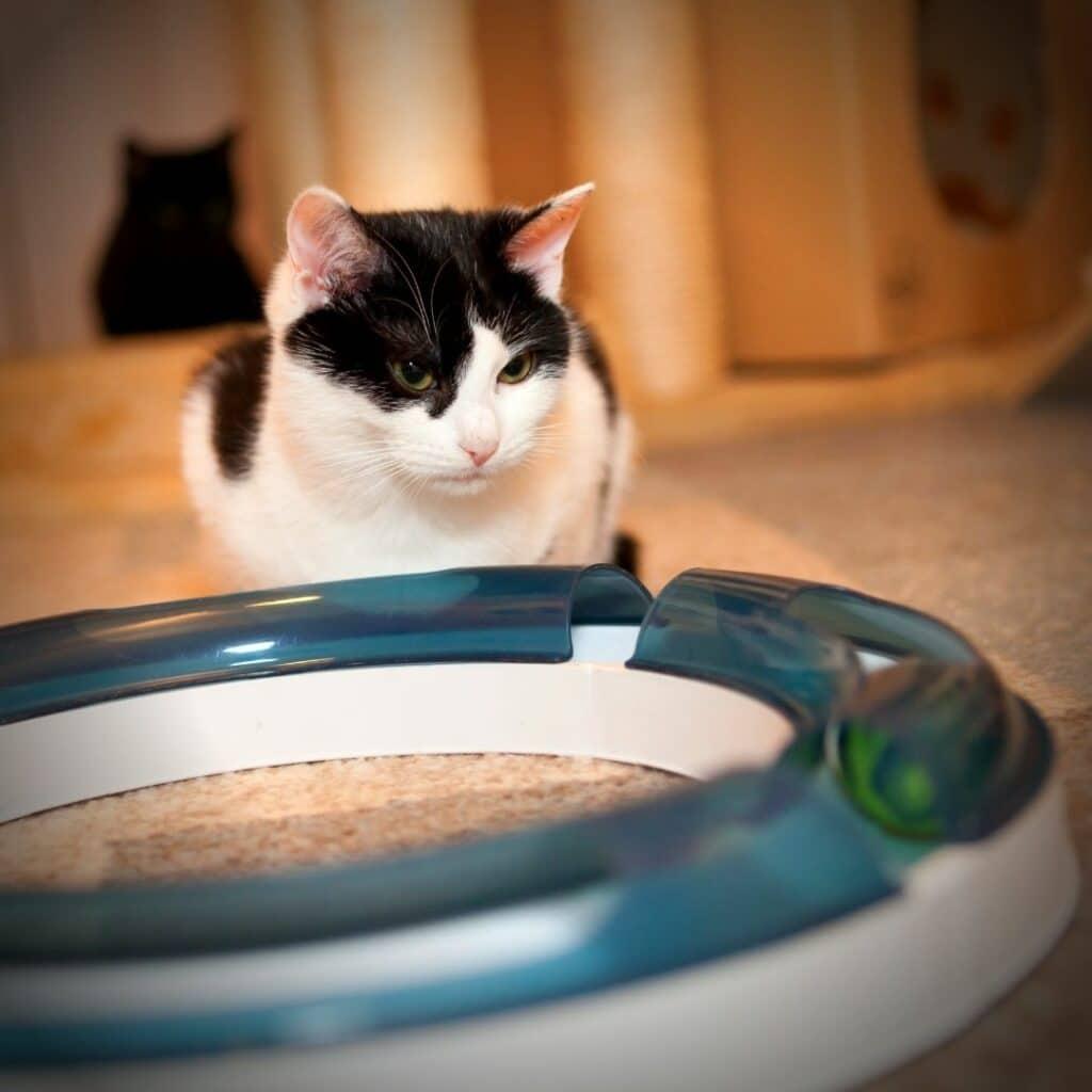 griffoir chat circuit jeu