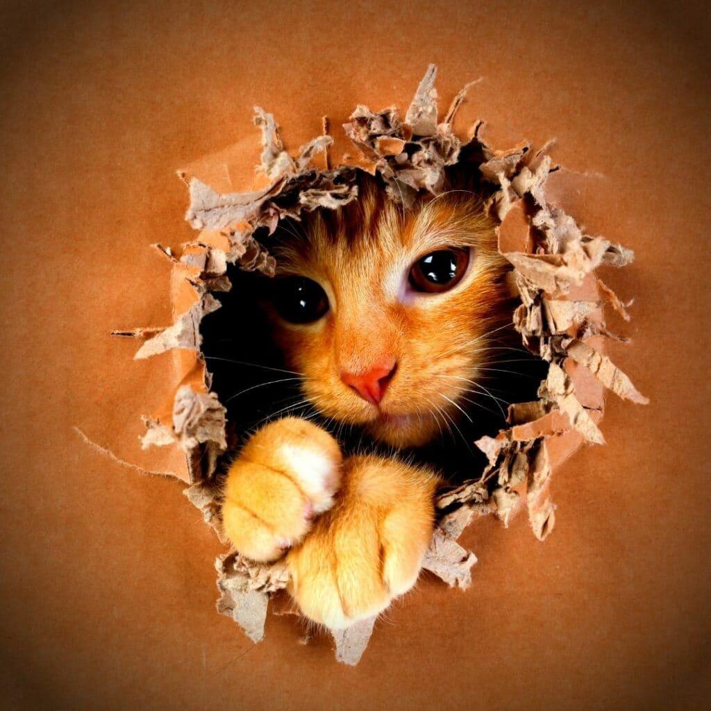 griffoir design pour chat meuble 2 en 1, couchage et griffoir