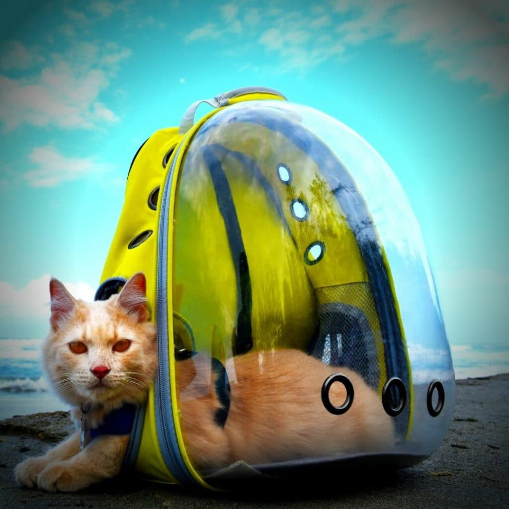 Un sac de transport idéal pour mon chat -- sac à dos