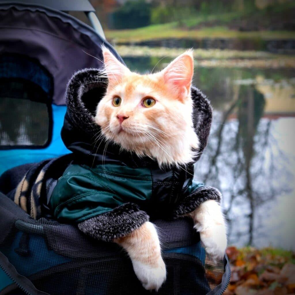 Un sac de transport idéal pour mon chat - vélo