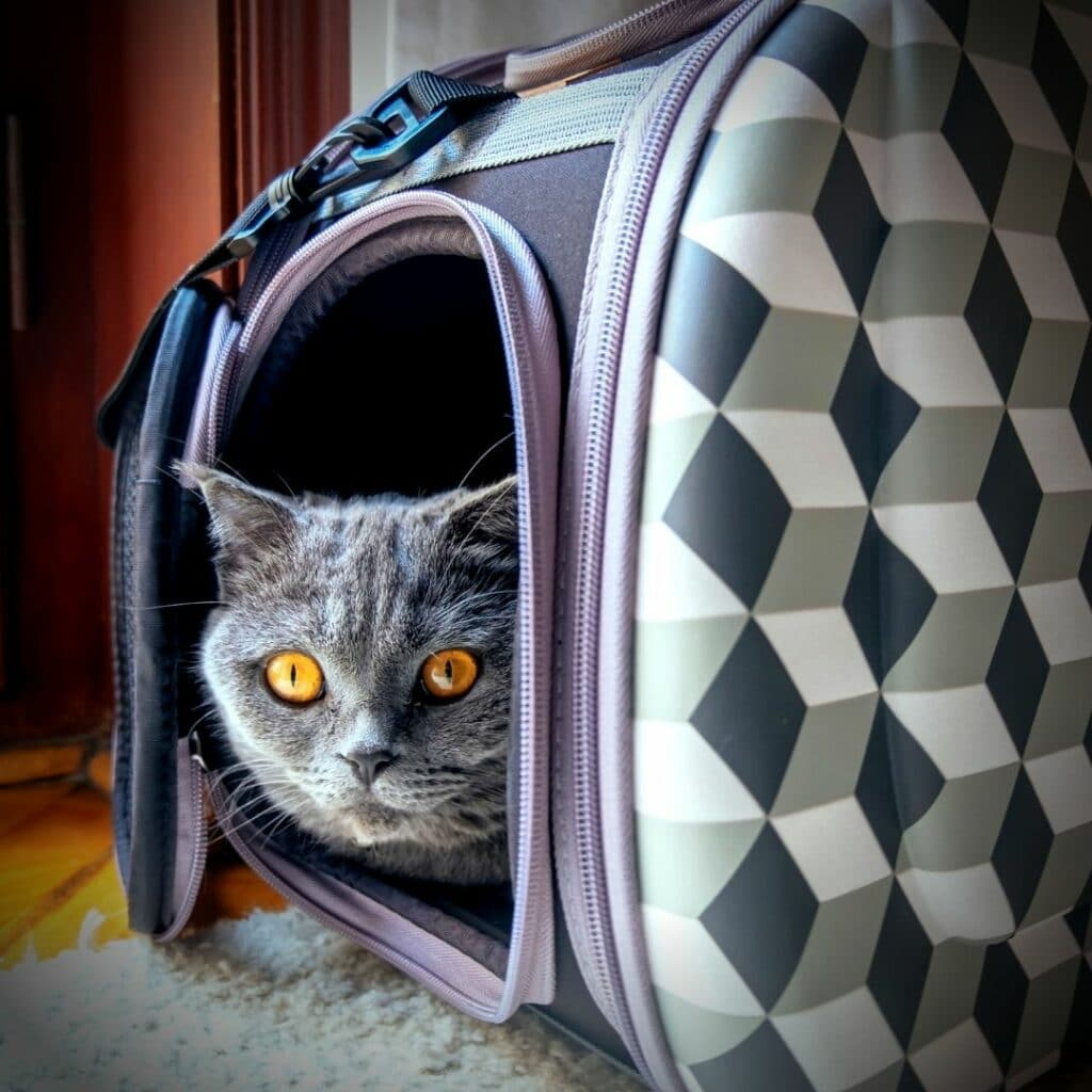 Un sac de transport idéal pour mon chat - version design