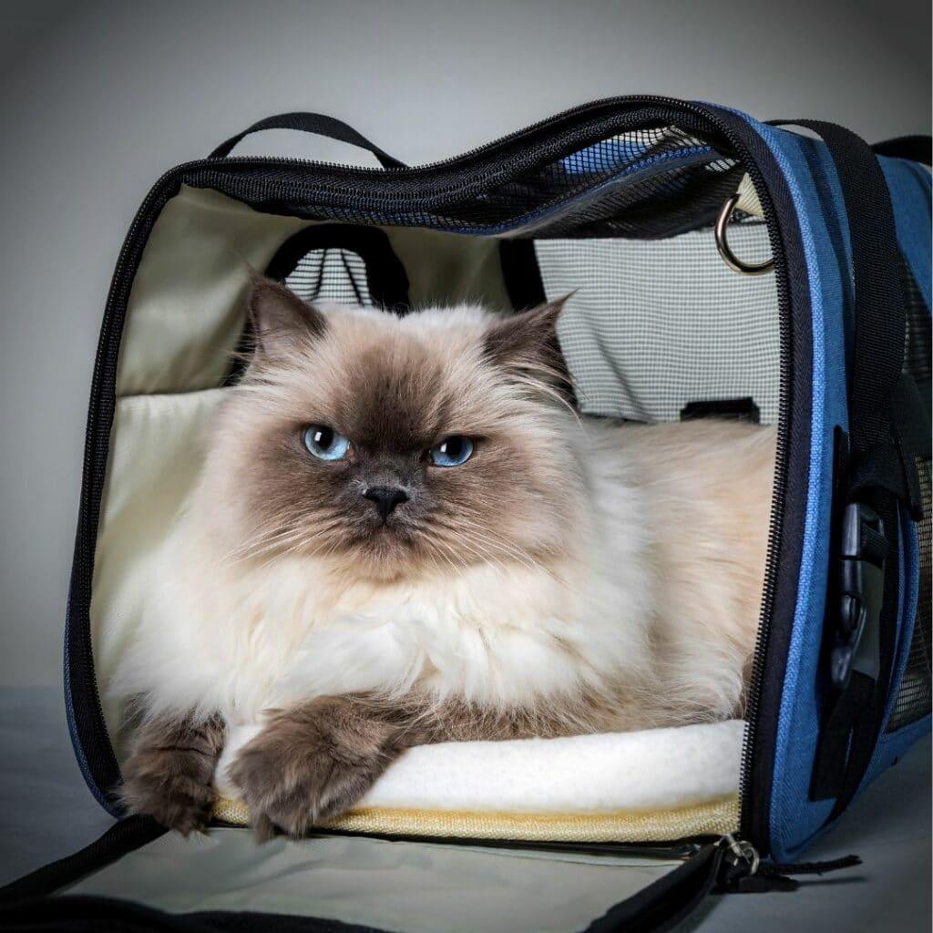 Un sac de transport idéal pour mon chat - version grande taille