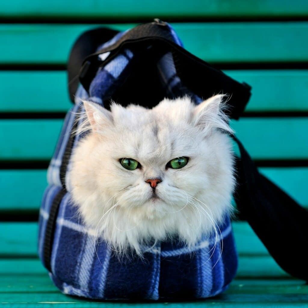 Un sac de transport idéal pour mon chat - version luxe