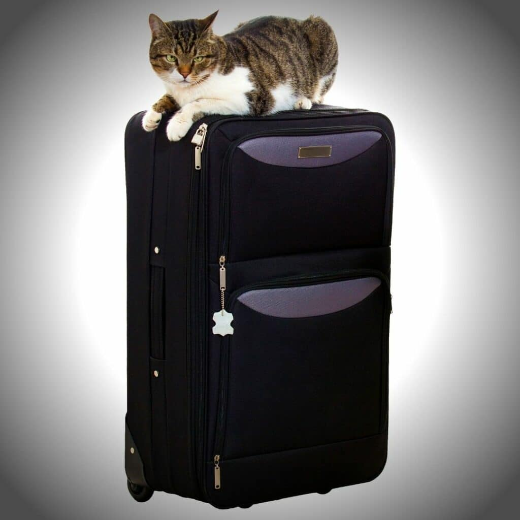 chat caisse de transport trolley