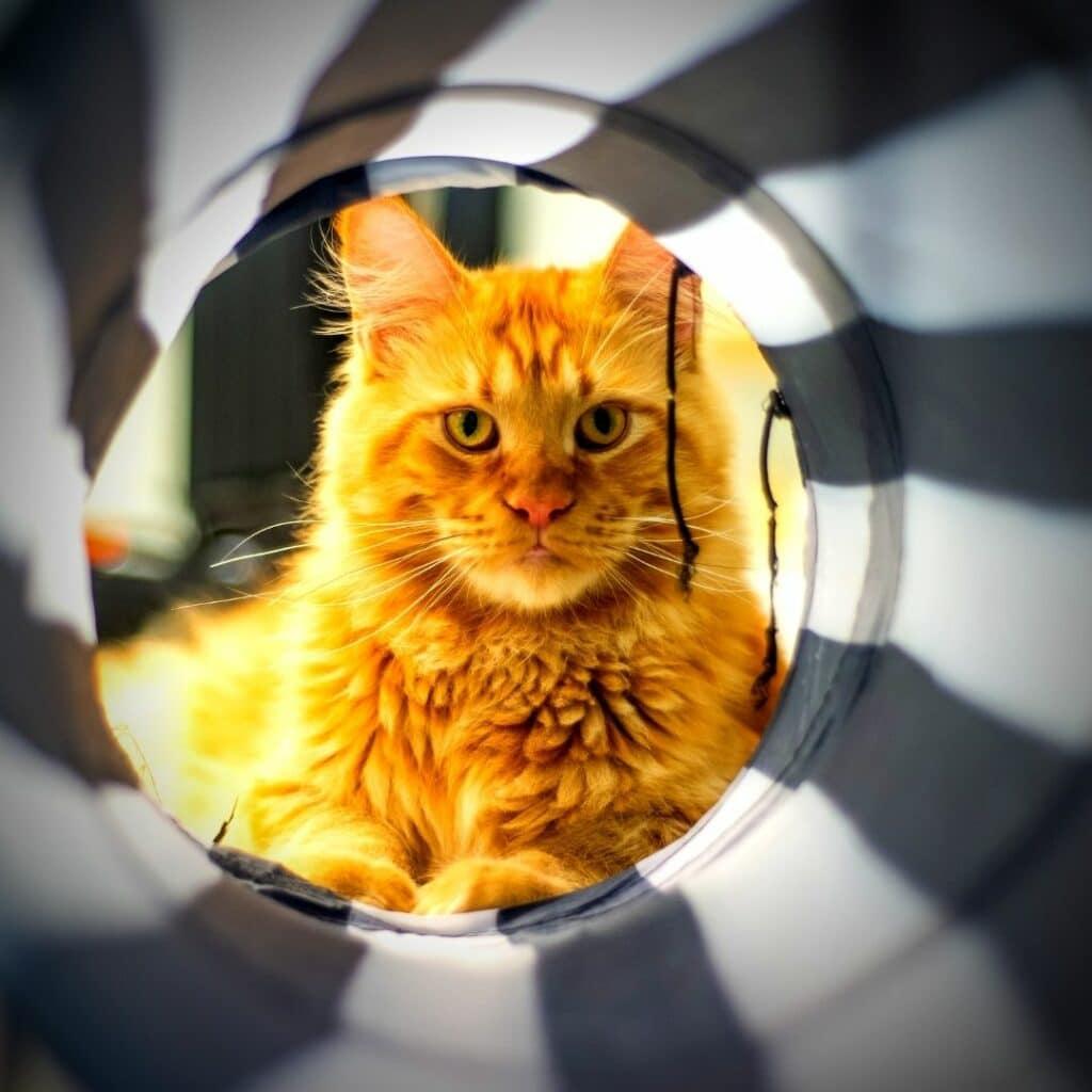 Jouets pour chat Les tunnels - bruissement et repliable