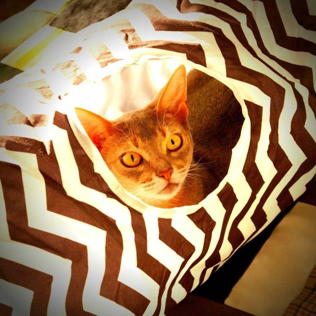 Jouets pour chat Les tunnels - design