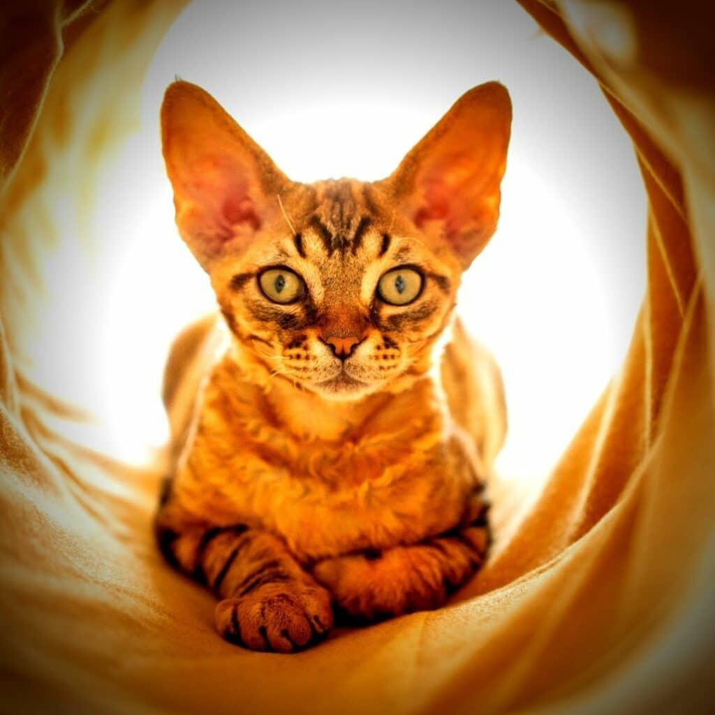 Jouets pour chat Les tunnels - ecologiques