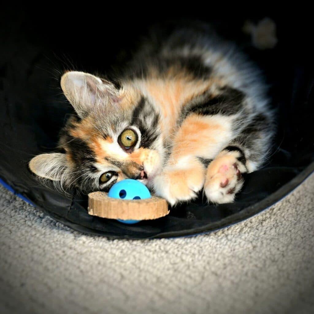 Jouets pour chat Les tunnels - griffoir