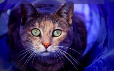 Jouets pour chat : Les tunnels