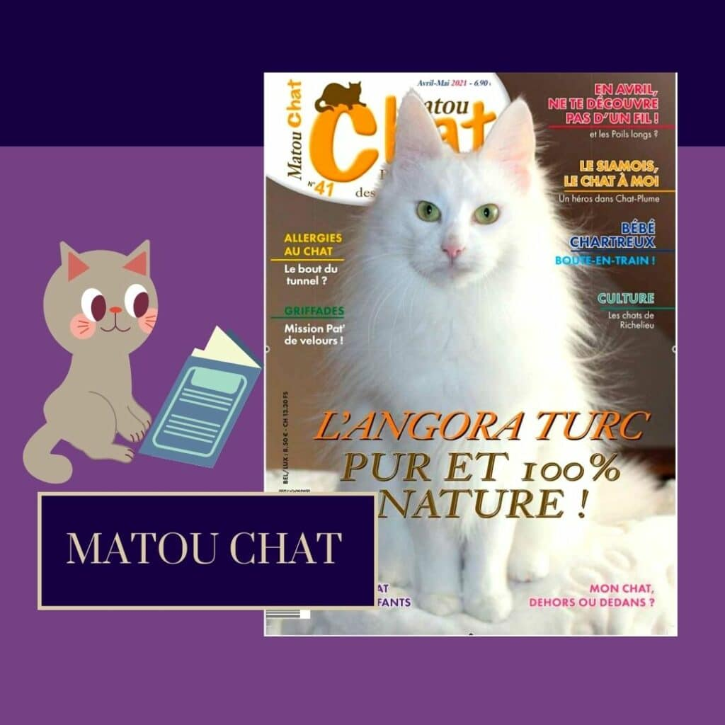 MATOU CHAT N° 41