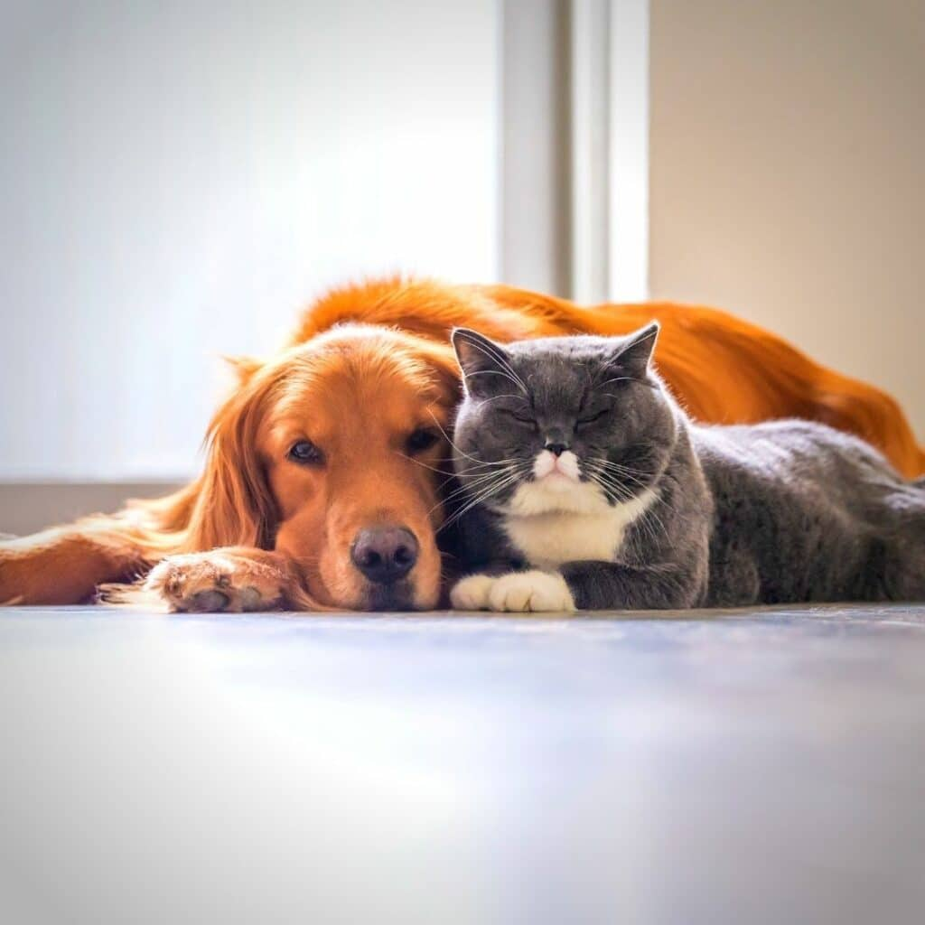 magazines chats et chiens