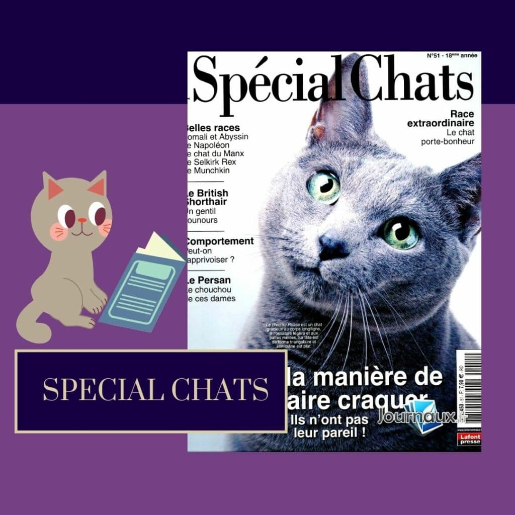 spécial chats