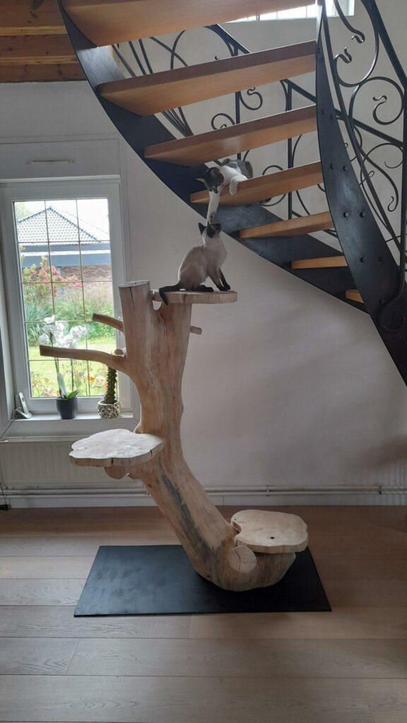 Arbre à chat en bois naturel de chez Boisdesign59