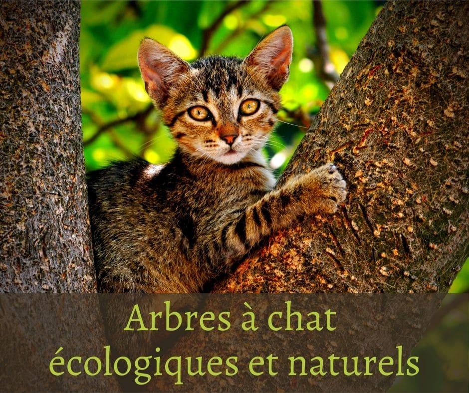 Arbres à chat écologiques et naturels