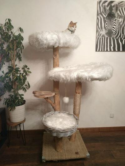 arbre à chat à chat qu'un son arbre
