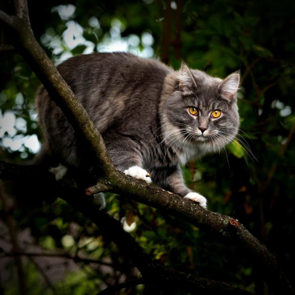 arbre à chat écologique