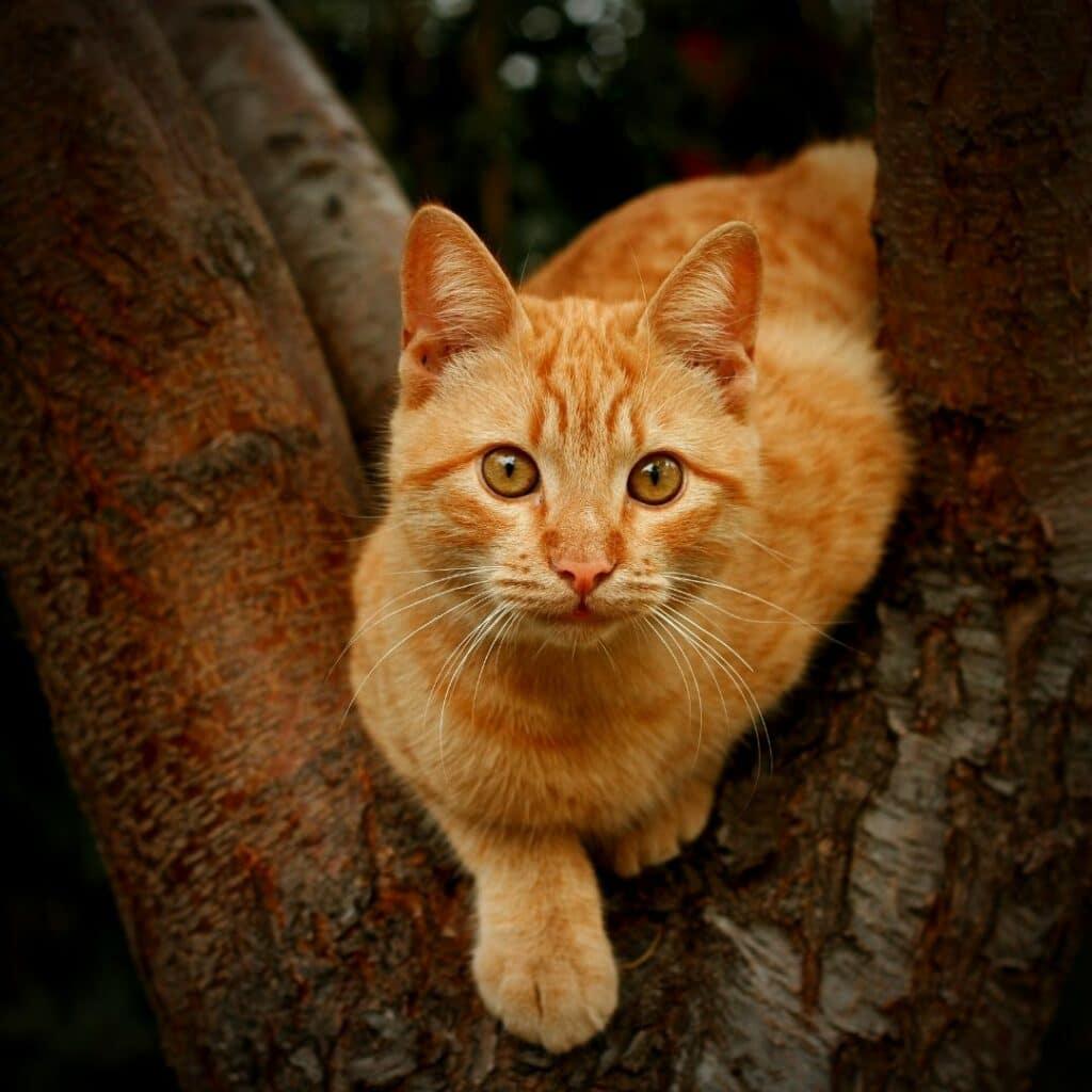arbre à chat naturel