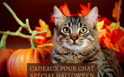 Cadeaux pour chat spécial Halloween