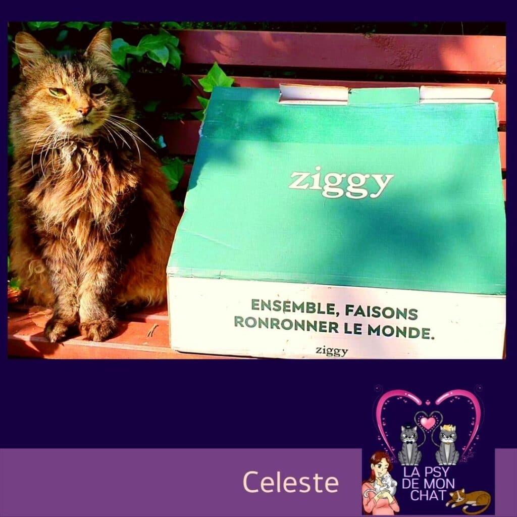 Celeste et la pâtée pour chats Ziggy