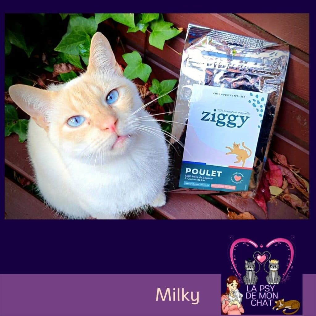 Milky et ses croquettes ziggy