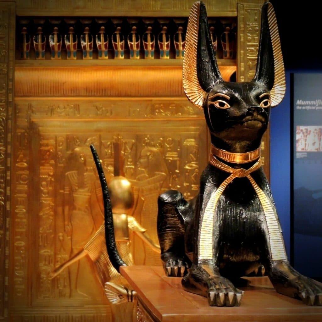 chat en egypte