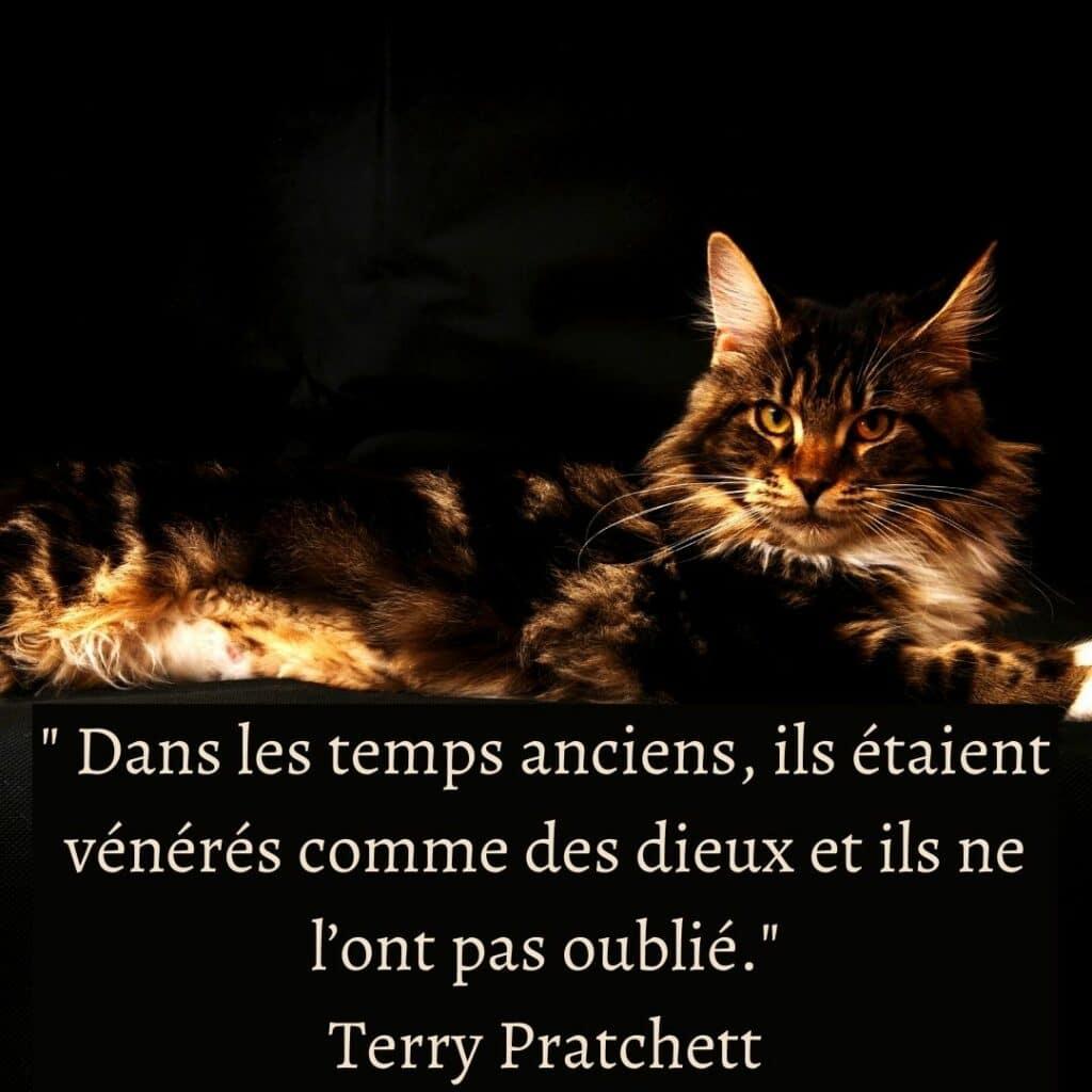 citation chat - Terry Pratchett